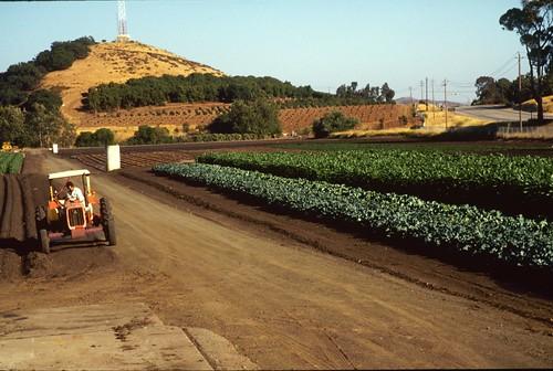 tractorbroc.jpg