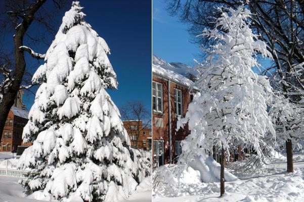 12 Snowpocalypse 2.0