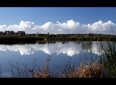 A Morning in Nature (Marcie Gonzalez) Tags: life california county ca blue wild sky orange usa cloud white lake reflection nature wet water clouds america canon reflections photography reflecting mirror pond san open wildlife united north lakes free calif formation southern socal joaquin area mirrored marsh states gonzalez wilderness oc ponds preserve sanctuary marcie irvine formations reflects marciegonzalez marciegonzalezphotography