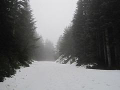 snow-covered road (hikeyeah) Tags: mt loop larch