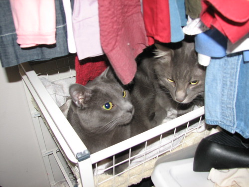 hiding in the closet