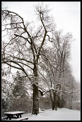 Snowmageddon I (Regina/acrphoto) Tags: winter snow nature snowy branches lexingtonky wintertrees wintry snowybranches 6timemomma snowmageddon acrphotography