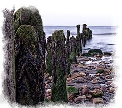 pebbles and groynes sea and sand (manual_exp) Tags: uk england seaweed water seaside sand pebbles groynes blueribbonwinner coth dragondaggerphoto yourwonderland