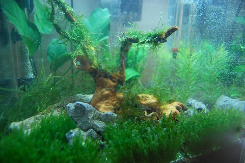 Planted Aquarium Close Up