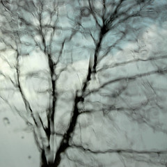 Panta rhei ( ) (Werner Schnell Images (2.stream)) Tags: winter snow tree window wet car rain baum pantarhei ws