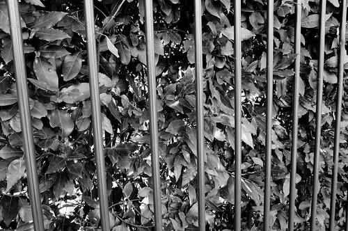 Foglie in gabbia