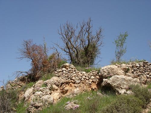 Stones, trees, sky