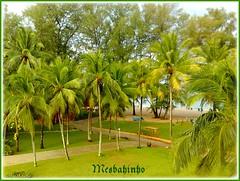 Thai Life (Mesbahinho) Tags: tree green beach thailand kuwait q8 topshots mesbahinho flickrsportal
