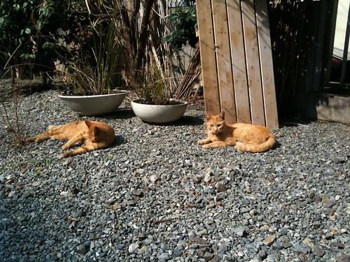 Today's Cat@2010-02-23
