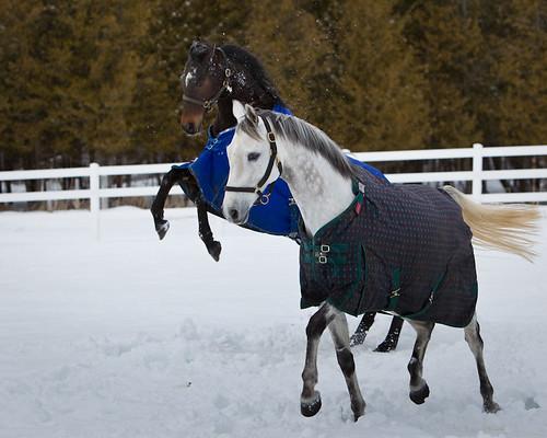 equinestuff_02.28.2010_mw-1216