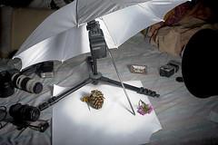 Macro Setup with Notes (Saad.Akhtar) Tags: flower macro diy flash howto setup macrobellows