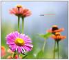 La naturaleza es... una opción (Jabi Artaraz) Tags: flowers flores color primavera beautiful europa europe sony bilbao zb bilbo 1000views loreak beautifulearth 100faves 1000vistas fineartphotos mywinners abigfave superaplus aplusphoto flickrbest impressedbeauy diamondclassphotographer flickrdiamond excapture jartaraz alfa350 artofimages updatecollection bestcapturesaoi euskoflicke bderechosdeautorauthorscopyrightb©jabiartaraz bestofblinkwinners blinksuperstars