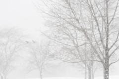 Snow Studies 10