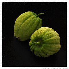 tomatillo© by Haalo