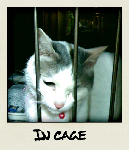 Cat In Cage. cat in cage. I went to the vet to pick up my dog#39;s medicine and met 2 cats