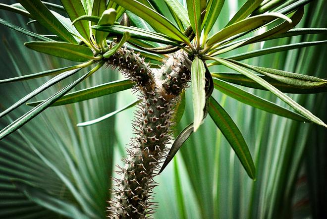 Palm pattern 2