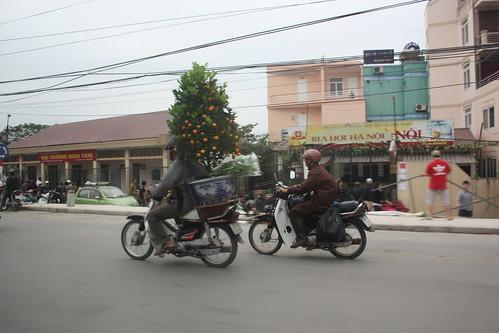 Kumquat trees on a scooter