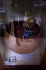 Petrie Museum - Ritual Burial (vintagedept) Tags: london film skeleton event ucl horror burial ritual screening artefact ancientegypt egyptology predynastic themummysshroud hammerfilmproductions heritagekey ancientworldinlondon event7746 petriemuseumofegytianarchaeology
