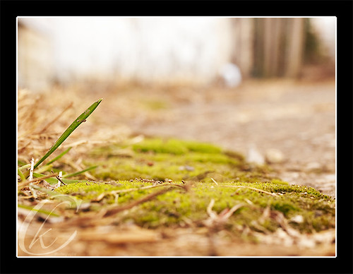 Blade of Grass with Ant's Eye View