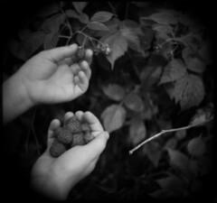 berries (chinese johnny) Tags: analog holga maine 120film squareformat unicum scannednegative bwfilm documentaryphotography trixfilm ithinkthisisartaward mediumformatnegative 6x6negative lifeinmonoaward flickrunitedaward 6x9negative reallifenotposed magicsquarepoetry royalgrup whiteinblackbranconopretonosepiaplease
