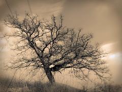 incisione (vocesilente88) Tags: natura albero lightroom secco solitudine incisione acquaforte
