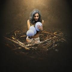 harboring delusions (brookeshaden) Tags: bird fairytale children nest mother surreal eggs delusions harboring brookeshaden texturebylesbrumes