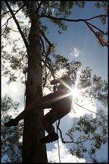 Claudi hängt am Baum