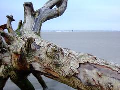 Treibholz (Jo Hamburg) Tags: driftwood nordsee treibholz