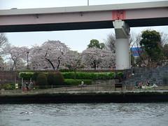 Yakatabune Ride (Tiger Machine) Tags: water japan river tokyo boat ride sakura odaiba sumida yakatabune funasei