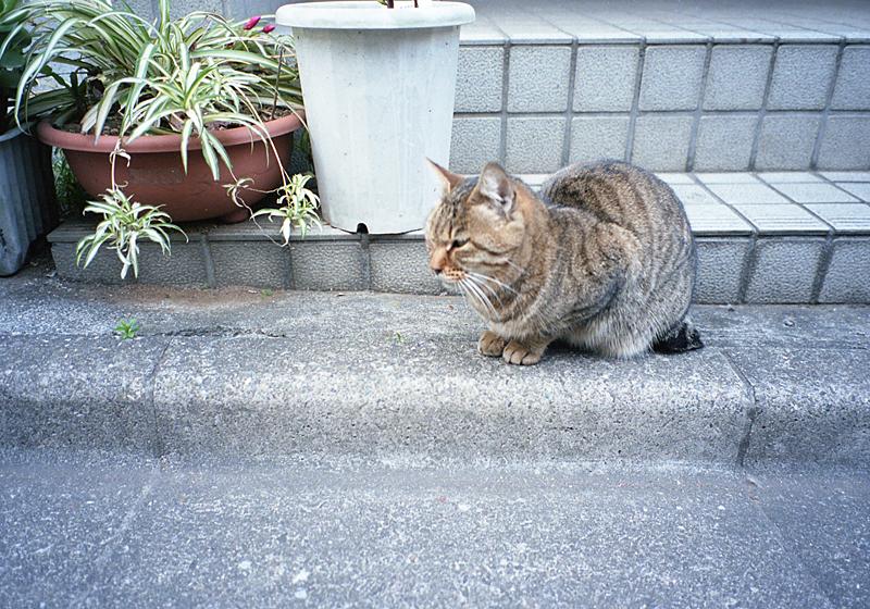 住宅街の猫