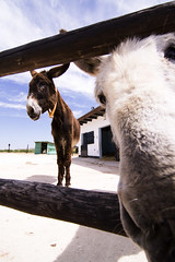 ALf (Ana Lobi) Tags: spring donkey andalucia malaga antequera aninal tokina1116