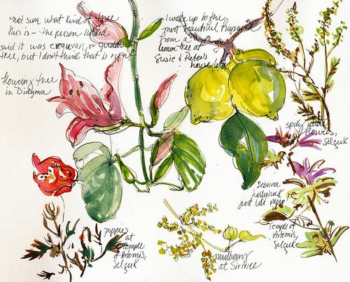 Turkey, flowers, fruit