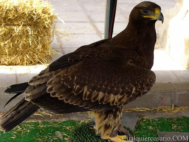 Aves extraordinarias V