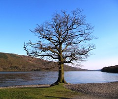 Lake Tree (chrisgandy2001) Tags: uk north lakes lakedistrict cumbria coniston cumberland grizedale torver colorphotoaward gettyvacation2010