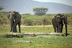 Water hole (Kevin Hughes 348) Tags: nature wildlife safari elephants africanelephants