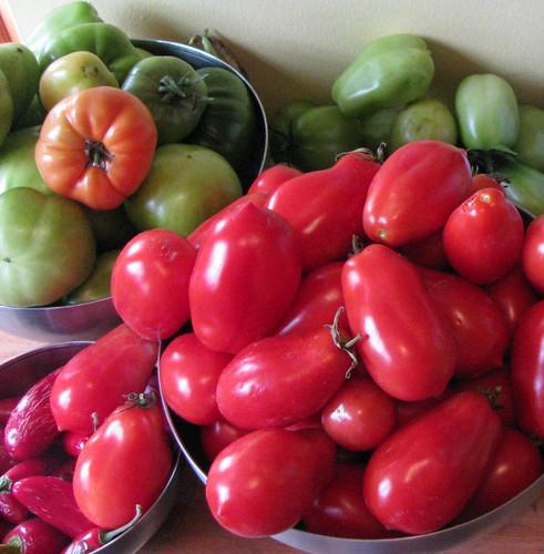 tomato harvest october 2009