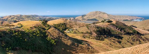 Otago Peninsula 16