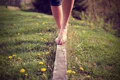 walk the line (oohvelocitygirl) Tags: feet yellow 35mm lens prime wooden nikon toes bare plank tippy dandelions d40
