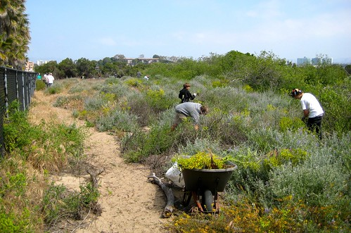 Removing Invasive Non-Natives Plants