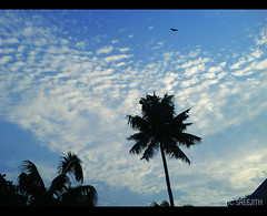 Every morning is a new beginning.... (RC Sreejith | ) Tags: sky clouds bluesky goodmorning scatteredclouds lightedclouds lightonclouds featheredclouds sreejithrc rcsreejith