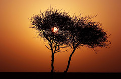 (~~[(QTR)]~Mubarak~) Tags: winter sunset sky orange sun tree silhouette desert dry 2008 doha qatar thekra tripleniceshot