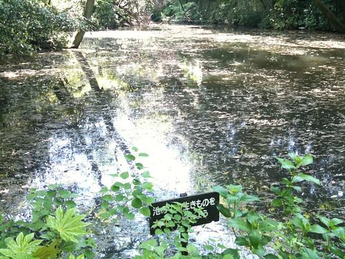 自然教育園 水鳥の沼