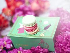 Macaroons in Wonderland (FUNKYAH) Tags: flowers food sweets laduree aliceinwonderland macaroons