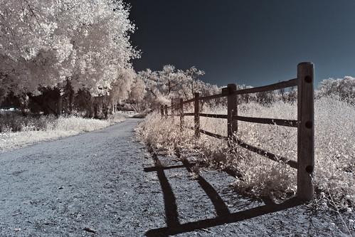 Bonita in  Infrared