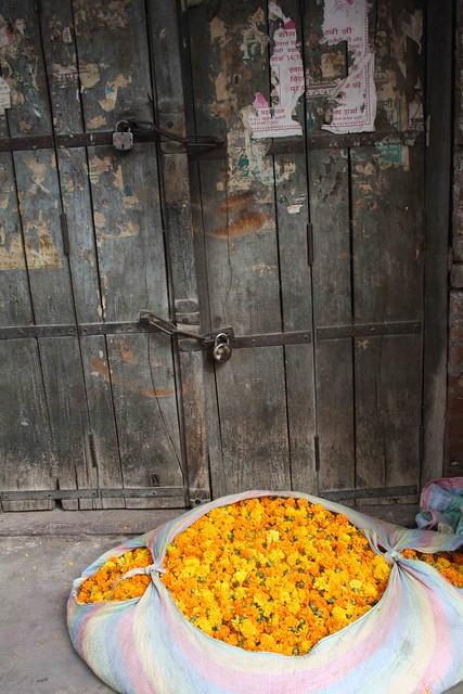 Marigold India