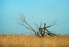 Reach to the sky (JanR1954) Tags: netherlands europa fotografie nederland natuur flevoland lelystad landschappen nld oostvaarderplassen provincies natuurenlandschap 0wereldlocaties