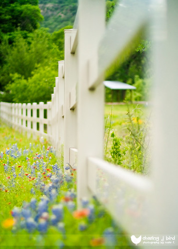 Texas Hill Country Fence (by Chasing J Bird {rosie.f})