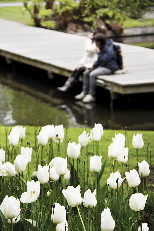Keukenhof, Holland