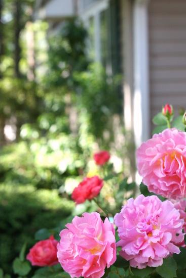 Nancy's Garden (5-10) - 1