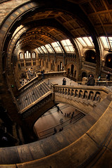 Natural History Museum (martinturner) Tags: london history museum angle dinosaur natural wide harry potter nat wideangle fisheye kensington hogwarts 8mm naturalhistorymuseum southkensington hist samyang martinturner welcomeuk